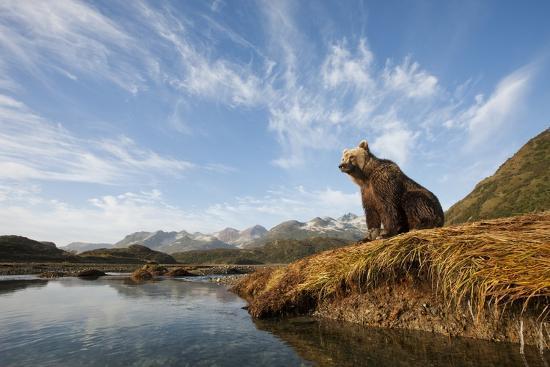 Brown Bear And Mountains Katmai National Park Alaska