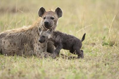Spotted Hyena and Pup