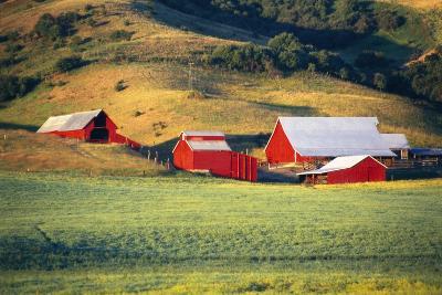 Fields Surrounding Red Barns