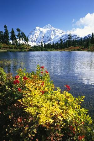 Flowers Growing at Edge of Mountain Lake