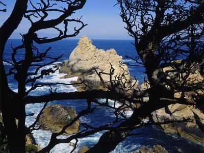 Cypress Trees at Point Lobos