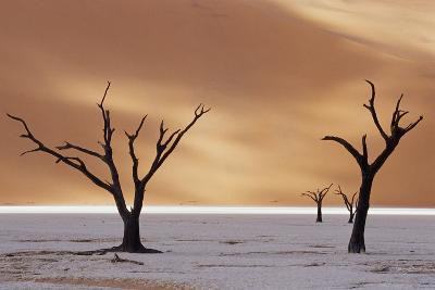 Dead Trees on Dry Lake Bed