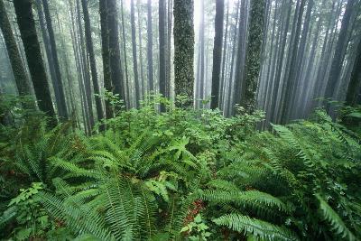 Fog Settling on Lush Rainforest