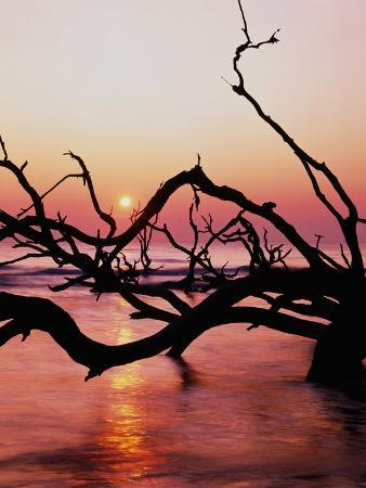 Boneyard Beach on Wassaw Island