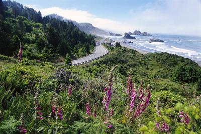 Coastal Foliage and Highway