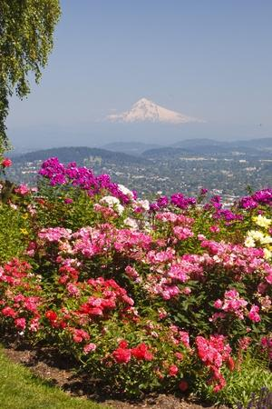 Rose Garden Adds Beauty to Mt.Hood from Pittock Mansion, Portland, Oregon, Pacific Northwest