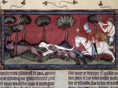 Fox Hunting, 14Th Century