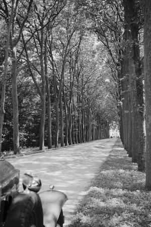 Tree-Lined Entrance Road to French Chateau Chenonceaux