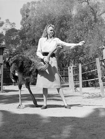 Woman Feeds Ostrich Orange on Farm
