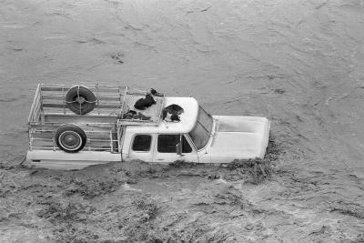 Dogs on Truck in Flood Waters