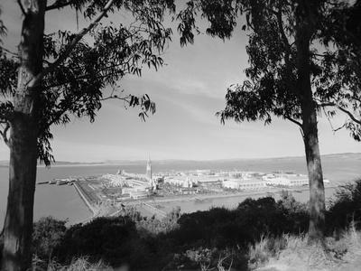 Distant View of San Francisco through Tree Line