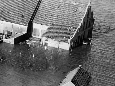 Animal Standing by House Submerged in Flood Waters