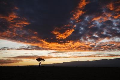 Acacia Tree Silhouette, Kenya
