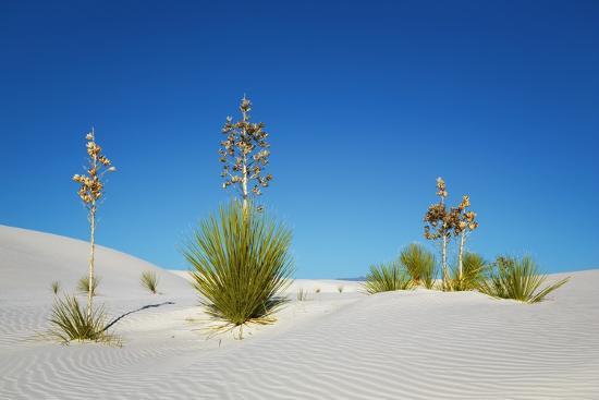 Image result for gypsum desert