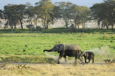 Kenya, Amboseli National Park, Elephant Mother Playing with Dust with Calf