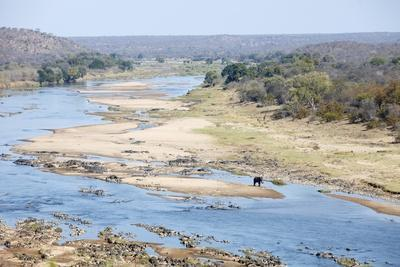 Elephant in Olifants River, South Africa