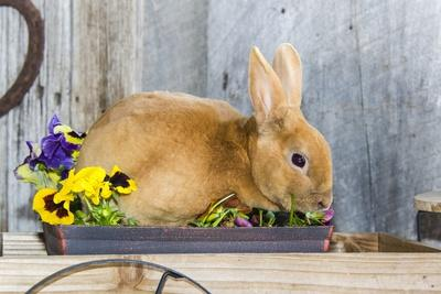 View of Rabbit Sitting in Flower Pot