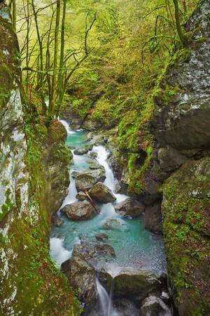 Mountain Stream with Rocks in Beech Forest, Triglav National Park, Julian Alps, Slovenia