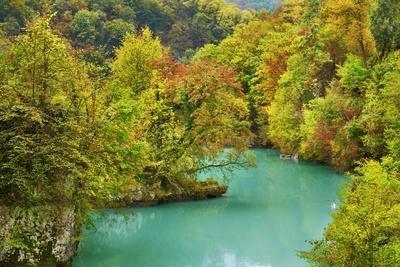 Deciduous Tree Forest in Autumn Colors along Soca River, Julian Alps, Slovenia,