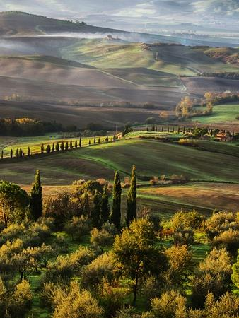 Morning Light over the Fields of Winter Wheat above the Tuscan Landscape