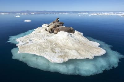 Walruses on Iceberg, Hudson Bay, Nunavut, Canada