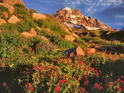 Pink Monkeyflowers below Mt. Hood