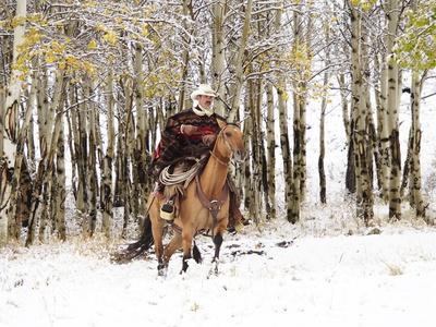 Cowboys Riding in Autumn Aspens with a Fresh Snowfall
