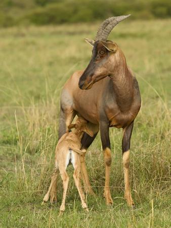 Topi and Nursing Baby