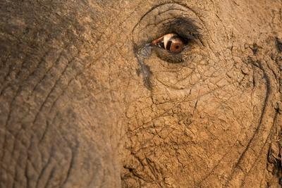 African Elephant's Eye, Kruger National Park, South Africa