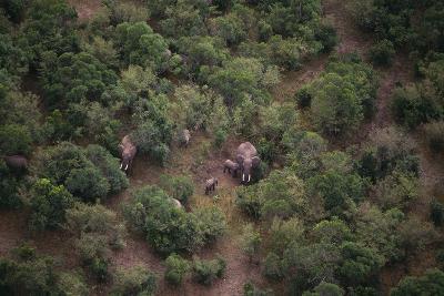 Elephants among the Bushes