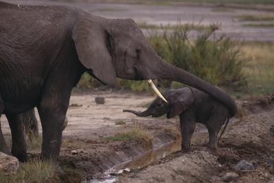Elephant Mother Helping Baby