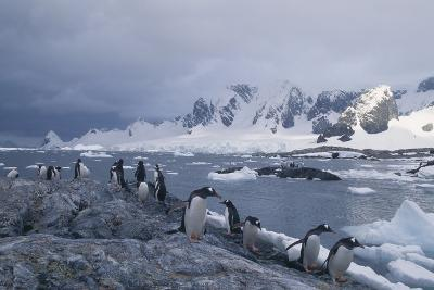 Penguins Walking on Rocks next to Water and Mountains