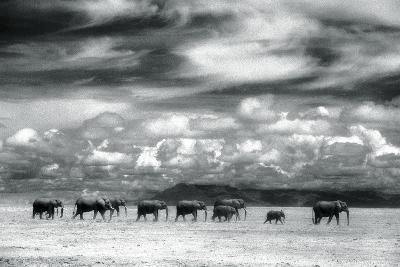 Herd of Elephants on the African Plains