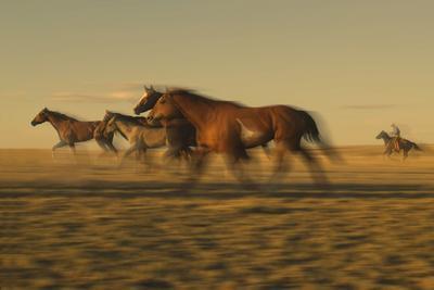 Cowboy Rounding up Horses