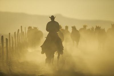 Cowboy Herding Horses through Dust