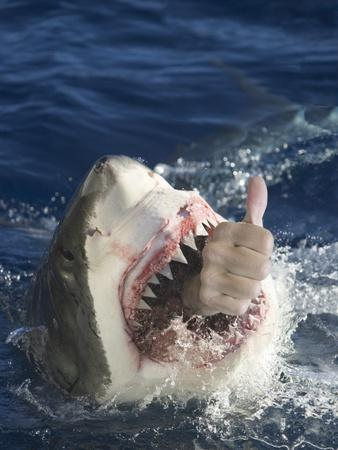 Man Making Thumbs up from Shark's Mouth