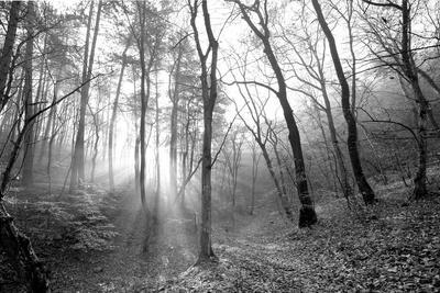 Autumn Forest With Fog And Lights