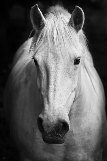 White Horses Black And White Art Portrait Photographic Print By