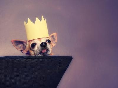A Cute Chihuahua With A Crown On