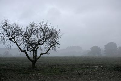 Dried Tree Vanish Into The Winter Fog