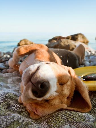 Sunbathing Dog Portrait