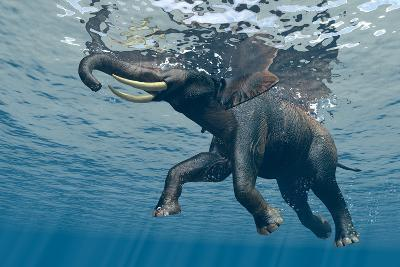 An Elephant Swims Through The Water