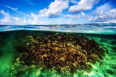 Beautiful Coral Garden Underwater, Diving on Maldives, Blue Cloudy Sky, Turquoise Water, Luxury Sum