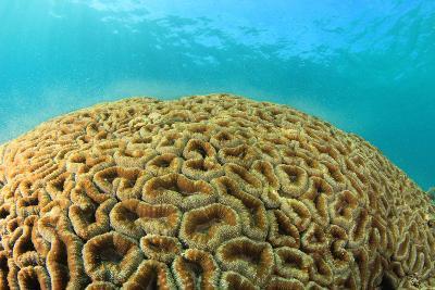Coral Spawning Underwater