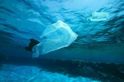 Environmental Problem - Plastic Bags Dumped on a Coral Reef in the Red Sea, Egypt