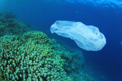 Environmental Problem - Plastic Trash on a Coral Reef. (I Cleared up This and Other Rubbish from Th