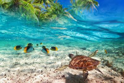 Green Turtle Swimming at Tropical Island of Caribbean Sea