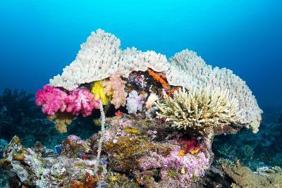 Beautiful Mushroom Shaped Coral Head with Pretty Pink Soft Corals, Staghorn Corals and an Ecosystem