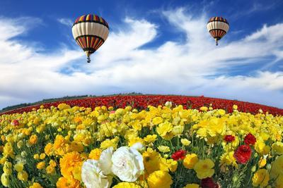 Beautiful Spring Weather, Two Beautiful Big Balloons Flying over the Field. the Huge Field of White