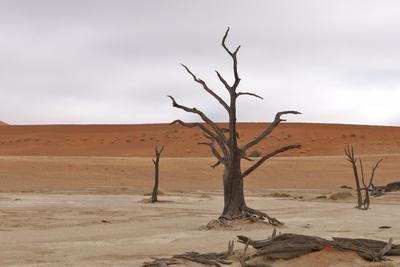 Tree Skeletons at Deadvlei, Namibia